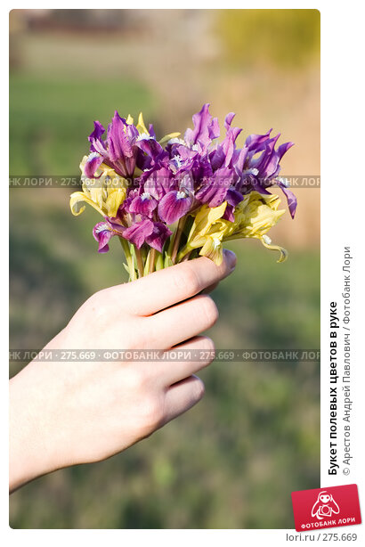 Букет полевых цветов в руке, фото № 275669, снято 12 апреля 2008 г. (c) Арестов Андрей Павлович / Фотобанк Лори