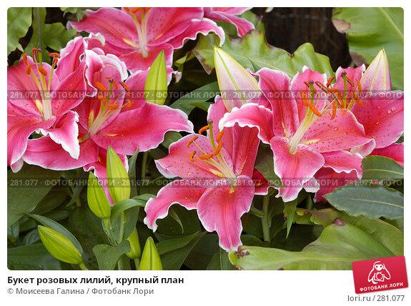 Букет розовых лилий, крупный план, фото № 281077, снято 10 мая 2008 г. (c) Моисеева Галина / Фотобанк Лори