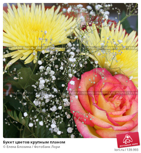 Букет цветов крупным планом, фото № 139993, снято 20 июля 2007 г. (c) Елена Блохина / Фотобанк Лори