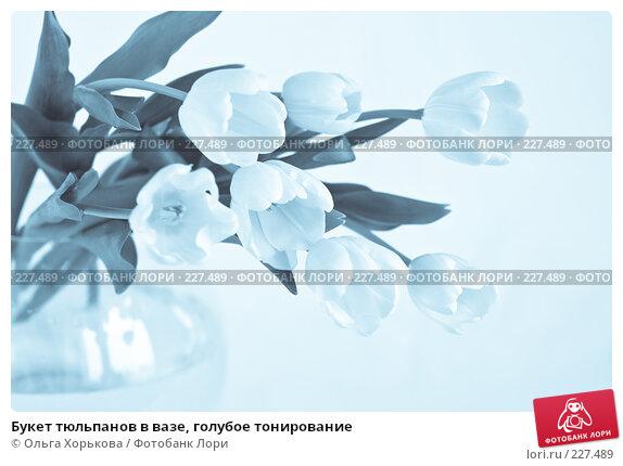 Букет тюльпанов в вазе, голубое тонирование, фото № 227489, снято 8 марта 2008 г. (c) Ольга Хорькова / Фотобанк Лори