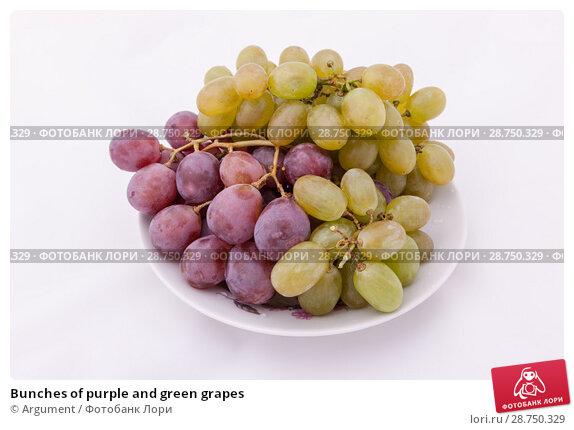 Купить «Bunches of purple and green grapes», фото № 28750329, снято 20 мая 2009 г. (c) Argument / Фотобанк Лори