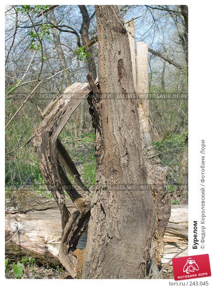 Купить «Бурелом», фото № 243045, снято 4 апреля 2008 г. (c) Федор Королевский / Фотобанк Лори