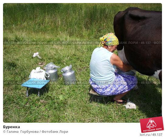 Буренка, фото № 49137, снято 9 июля 2004 г. (c) Галина  Горбунова / Фотобанк Лори