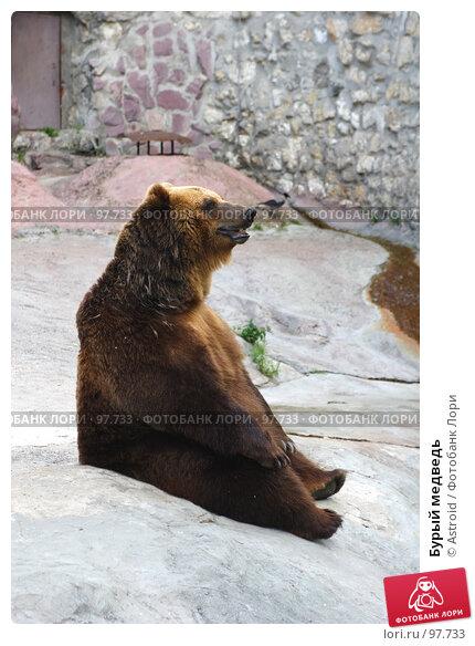 Купить «Бурый медведь», фото № 97733, снято 24 июня 2005 г. (c) Astroid / Фотобанк Лори