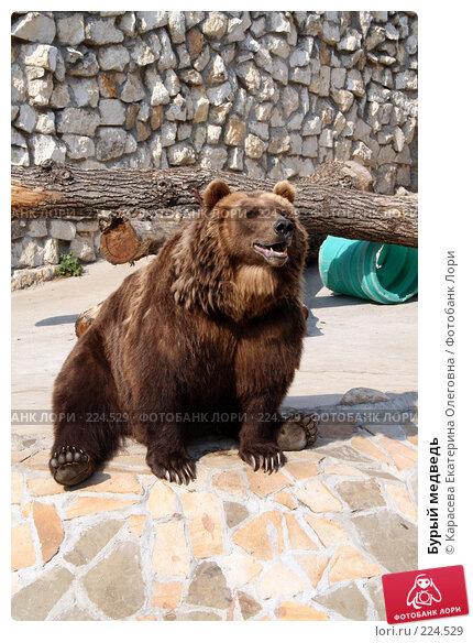 Купить «Бурый медведь», фото № 224529, снято 11 июля 2007 г. (c) Карасева Екатерина Олеговна / Фотобанк Лори