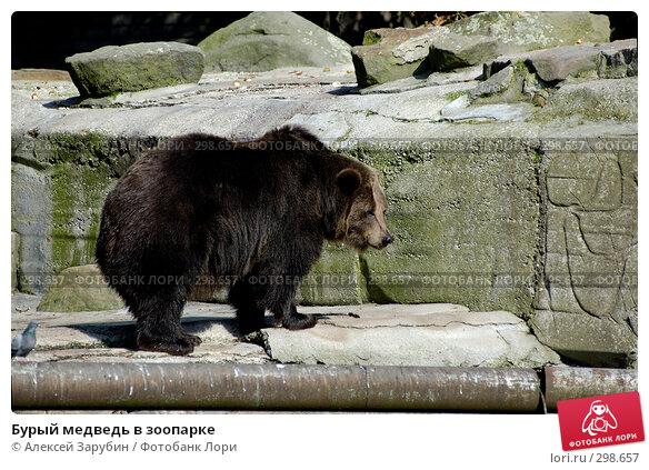 Купить «Бурый медведь в зоопарке», фото № 298657, снято 22 сентября 2007 г. (c) Алексей Зарубин / Фотобанк Лори