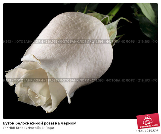 Бутон белоснежной розы на чёрном, фото № 219593, снято 9 марта 2008 г. (c) Kribli-Krabli / Фотобанк Лори