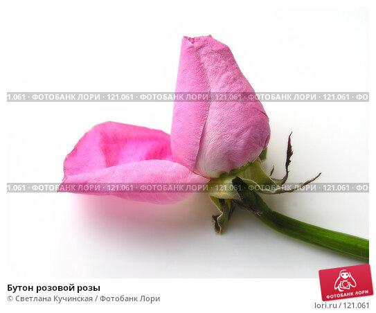 Бутон розовой розы, фото № 121061, снято 25 июля 2017 г. (c) Светлана Кучинская / Фотобанк Лори