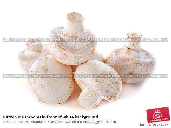 Button mushrooms in front of white background. Стоковое фото, фотограф Zoonar.com/Emmanuelle BONZAMI / age Fotostock / Фотобанк Лори