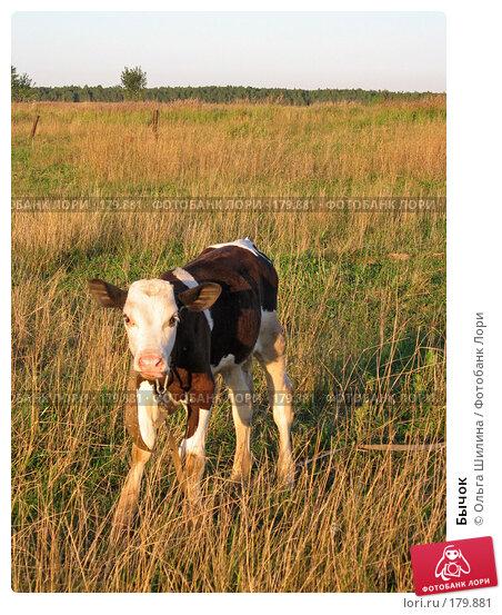 Бычок, фото № 179881, снято 8 августа 2007 г. (c) Ольга Шилина / Фотобанк Лори