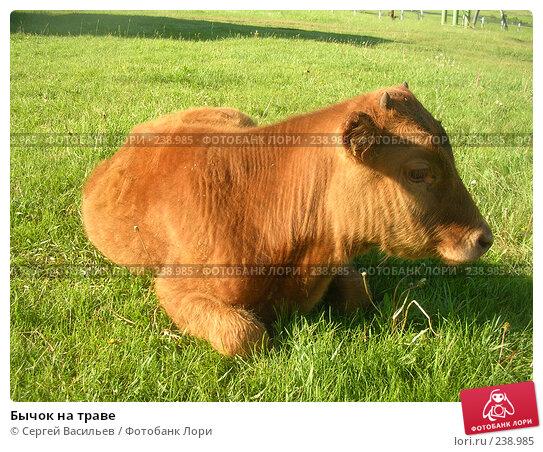 Бычок на траве, фото № 238985, снято 7 июля 2006 г. (c) Сергей Васильев / Фотобанк Лори