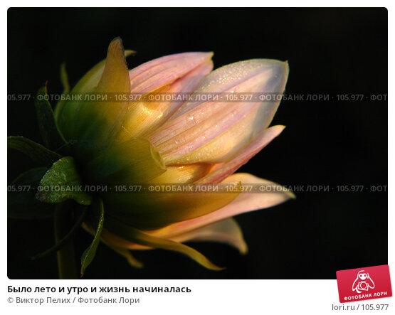 Было лето и утро и жизнь начиналась, фото № 105977, снято 7 сентября 2007 г. (c) Виктор Пелих / Фотобанк Лори