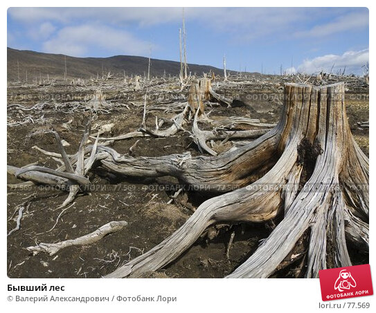 Бывший лес, фото № 77569, снято 24 марта 2017 г. (c) Валерий Александрович / Фотобанк Лори