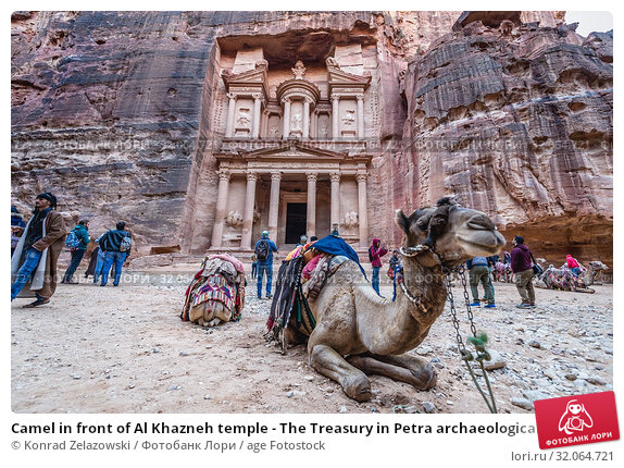 Camel in front of Al Khazneh temple - The Treasury in Petra archaeological city in Jordan. (2018 год). Редакционное фото, фотограф Konrad Zelazowski / age Fotostock / Фотобанк Лори