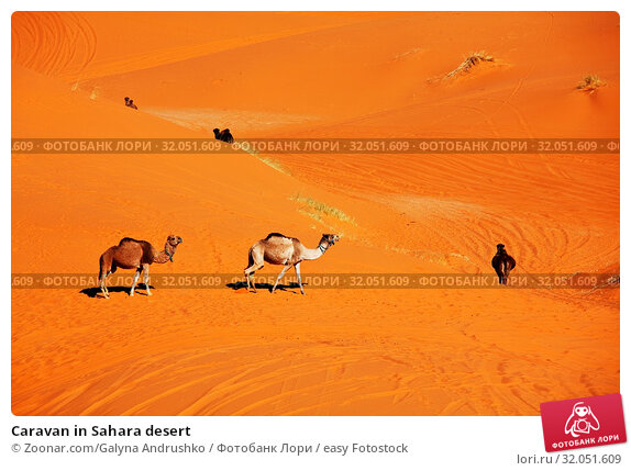 Caravan in Sahara desert. Стоковое фото, фотограф Zoonar.com/Galyna Andrushko / easy Fotostock / Фотобанк Лори