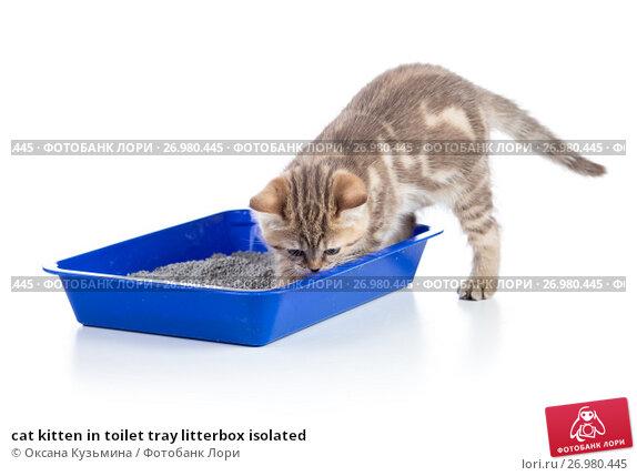 natural flea shampoo for cats recipe