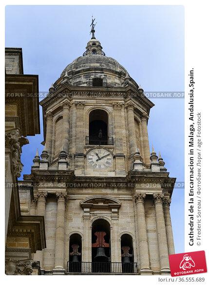 Cathedral de la Encarnacion in Malaga, Andalusia,Spain. Стоковое фото, фотограф Frederic Soreau / age Fotostock / Фотобанк Лори