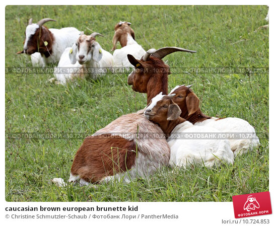 Купить «caucasian brown european brunette kid», фото № 10724853, снято 26 мая 2019 г. (c) PantherMedia / Фотобанк Лори