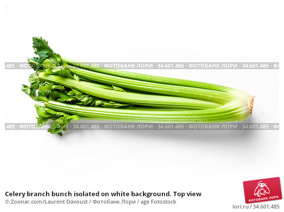 Celery branch bunch isolated on white background. Top view. Стоковое фото, фотограф Zoonar.com/Laurent Davoust / age Fotostock / Фотобанк Лори