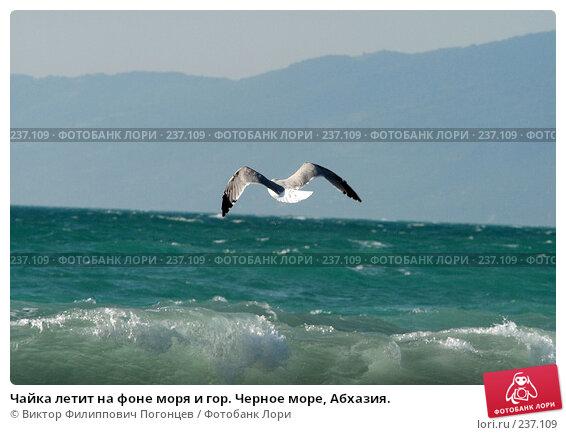 Чайка летит на фоне моря и гор. Черное море, Абхазия., фото № 237109, снято 31 августа 2006 г. (c) Виктор Филиппович Погонцев / Фотобанк Лори