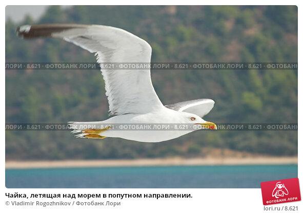 Чайка, летящая над морем в попутном направлении., фото № 8621, снято 21 августа 2006 г. (c) Vladimir Rogozhnikov / Фотобанк Лори