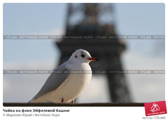 Купить «Чайка на фоне Эйфелевой башни», фото № 175465, снято 11 декабря 2007 г. (c) Марюнин Юрий / Фотобанк Лори