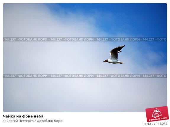Чайка на фоне неба, фото № 144237, снято 9 июля 2007 г. (c) Сергей Пестерев / Фотобанк Лори