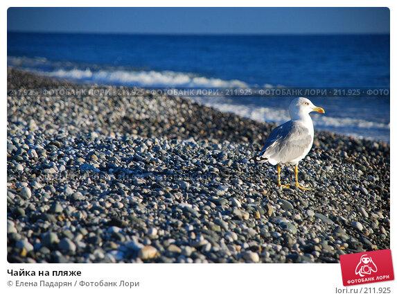 Купить «Чайка на пляже», фото № 211925, снято 18 октября 2007 г. (c) Елена Падарян / Фотобанк Лори