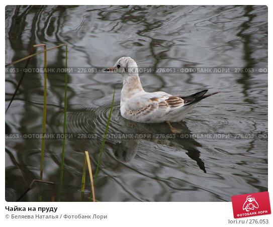 Чайка на пруду, фото № 276053, снято 5 октября 2007 г. (c) Беляева Наталья / Фотобанк Лори