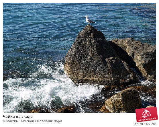Купить «Чайка на скале», фото № 327285, снято 23 августа 2006 г. (c) Максим Пименов / Фотобанк Лори