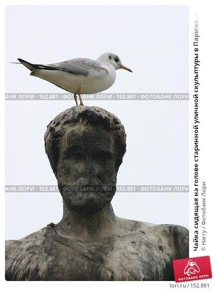 Чайка сидящая на голове старинной уличной скульптуры в Париже, Франция, фото № 152881, снято 28 февраля 2006 г. (c) Harry / Фотобанк Лори