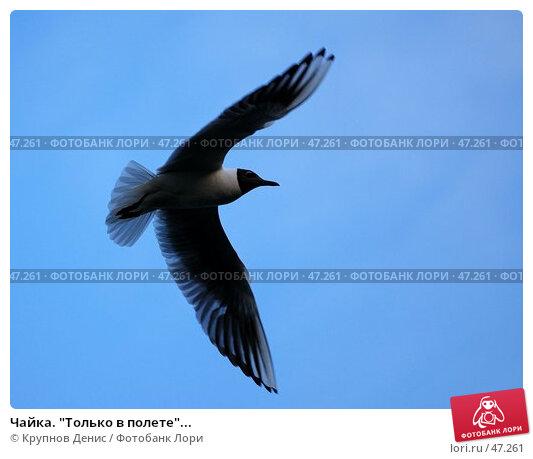 """Чайка. """"Только в полете""""..., фото № 47261, снято 26 апреля 2007 г. (c) Крупнов Денис / Фотобанк Лори"""