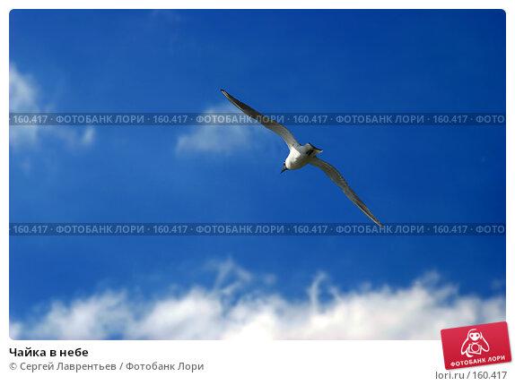 Чайка в небе, фото № 160417, снято 28 мая 2005 г. (c) Сергей Лаврентьев / Фотобанк Лори