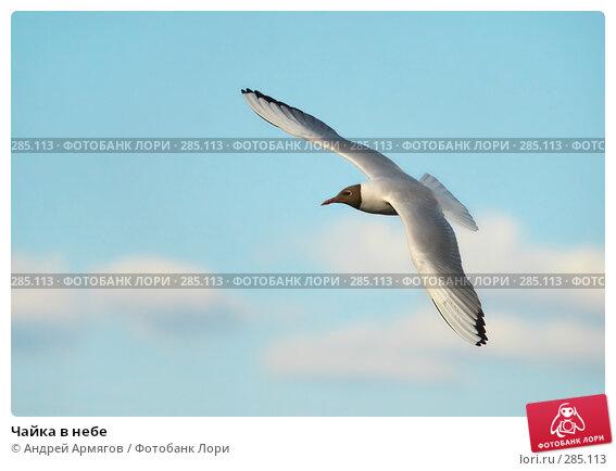 Купить «Чайка в небе», фото № 285113, снято 17 мая 2006 г. (c) Андрей Армягов / Фотобанк Лори