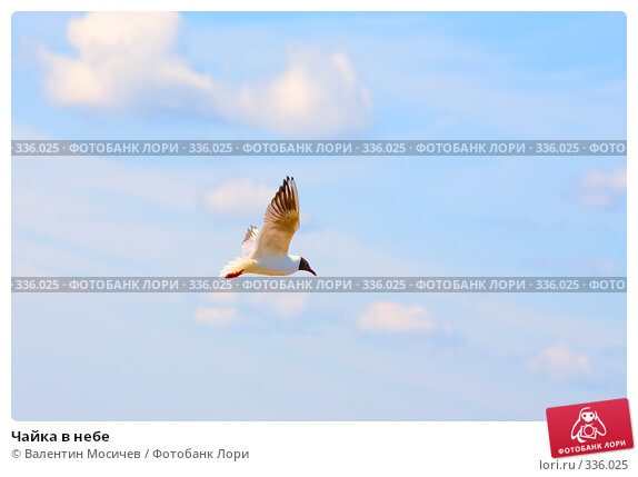 Чайка в небе, фото № 336025, снято 14 июня 2008 г. (c) Валентин Мосичев / Фотобанк Лори
