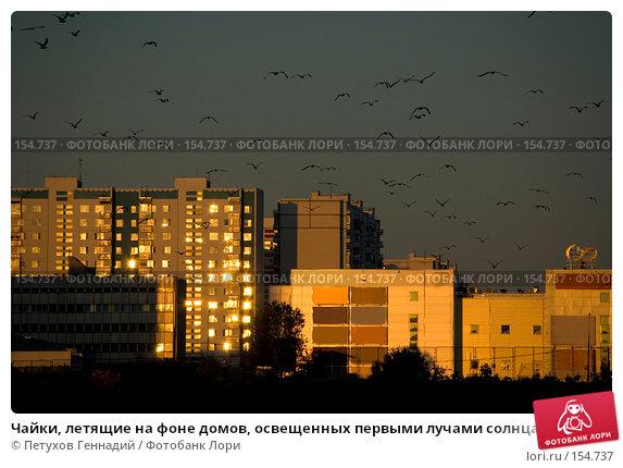 Чайки, летящие на фоне домов, освещенных первыми лучами солнца, фото № 154737, снято 15 июля 2007 г. (c) Петухов Геннадий / Фотобанк Лори