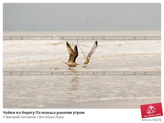 Чайки на берегу Ла-манша ранним утром, фото № 8673, снято 26 октября 2005 г. (c) Валерий Ситников / Фотобанк Лори