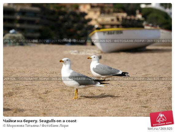 Чайки на берегу. Seagulls on a coast, фото № 269925, снято 16 апреля 2008 г. (c) Морозова Татьяна / Фотобанк Лори
