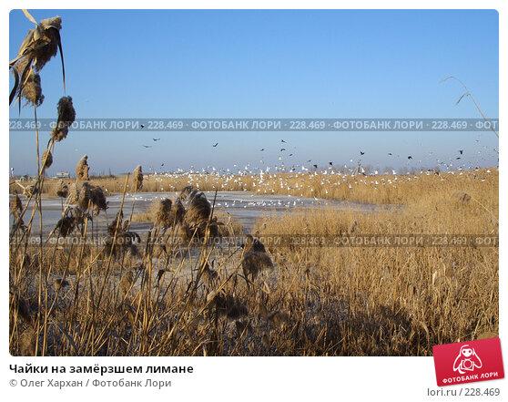 Чайки на замёрзшем лимане, фото № 228469, снято 17 января 2008 г. (c) Олег Хархан / Фотобанк Лори
