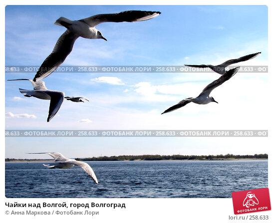 Чайки над Волгой, город Волгоград, фото № 258633, снято 11 октября 2007 г. (c) Анна Маркова / Фотобанк Лори