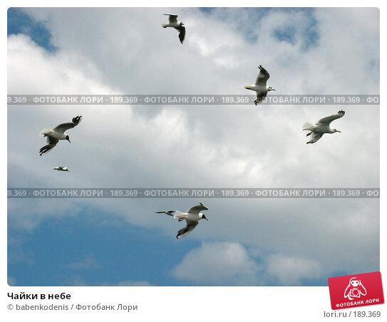 Купить «Чайки в небе», фото № 189369, снято 20 июня 2002 г. (c) Бабенко Денис Юрьевич / Фотобанк Лори
