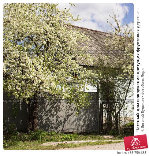 Частный  дом в окружение цветущих фруктовых деревьев. Липецк. Стоковое фото, фотограф Евгений Будюкин / Фотобанк Лори