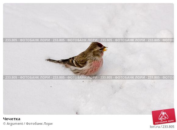 Чечетка, фото № 233805, снято 24 марта 2008 г. (c) Argument / Фотобанк Лори