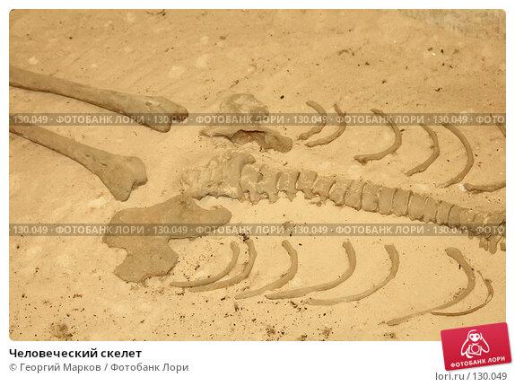 Купить «Человеческий скелет», фото № 130049, снято 21 апреля 2007 г. (c) Георгий Марков / Фотобанк Лори