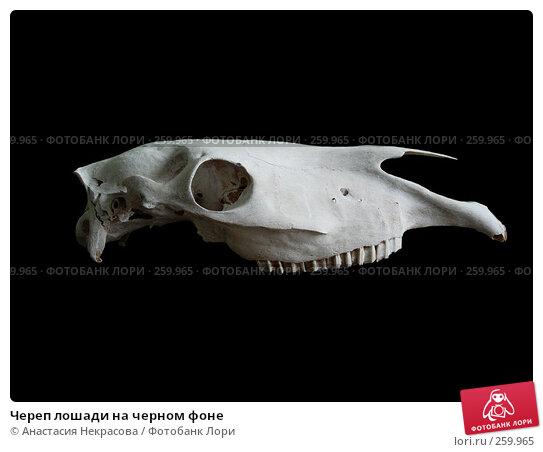 Купить «Череп лошади на черном фоне», фото № 259965, снято 19 апреля 2008 г. (c) Анастасия Некрасова / Фотобанк Лори