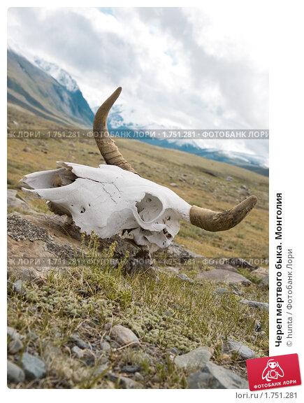 Череп мертвого быка. Монголия, фото № 1751281, снято 20 июля 2009 г. (c) hunta / Фотобанк Лори