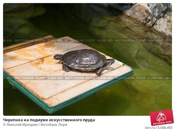 Купить «Черепаха на подиуме искусственного пруда», фото № 5008493, снято 14 июля 2013 г. (c) Николай Мухорин / Фотобанк Лори