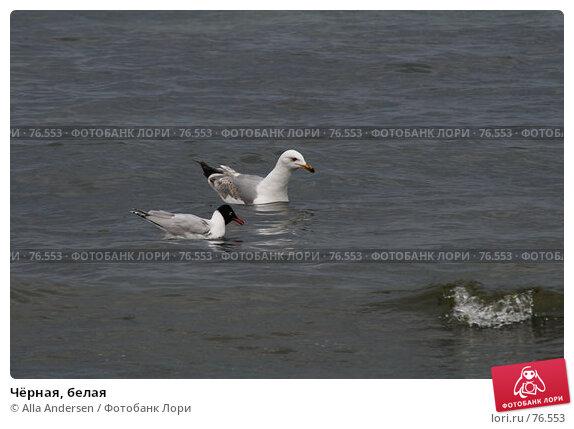 Купить «Чёрная, белая», фото № 76553, снято 5 мая 2007 г. (c) Alla Andersen / Фотобанк Лори
