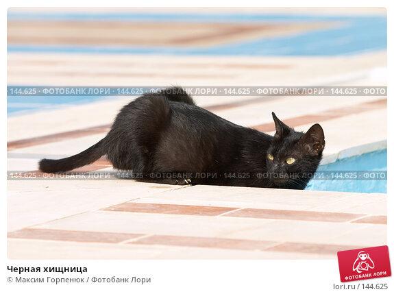 Черная хищница, фото № 144625, снято 23 мая 2007 г. (c) Максим Горпенюк / Фотобанк Лори