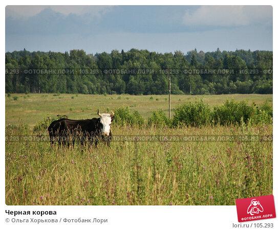 Черная корова, фото № 105293, снято 23 мая 2017 г. (c) Ольга Хорькова / Фотобанк Лори